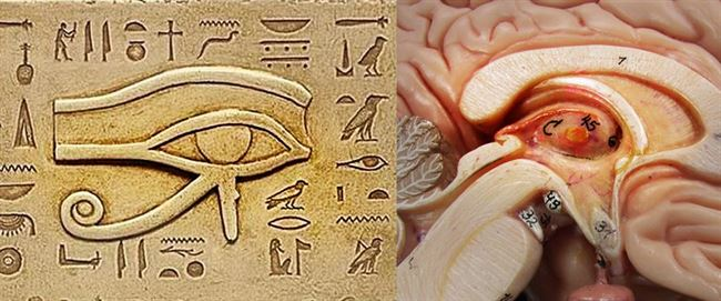pineal-egypt