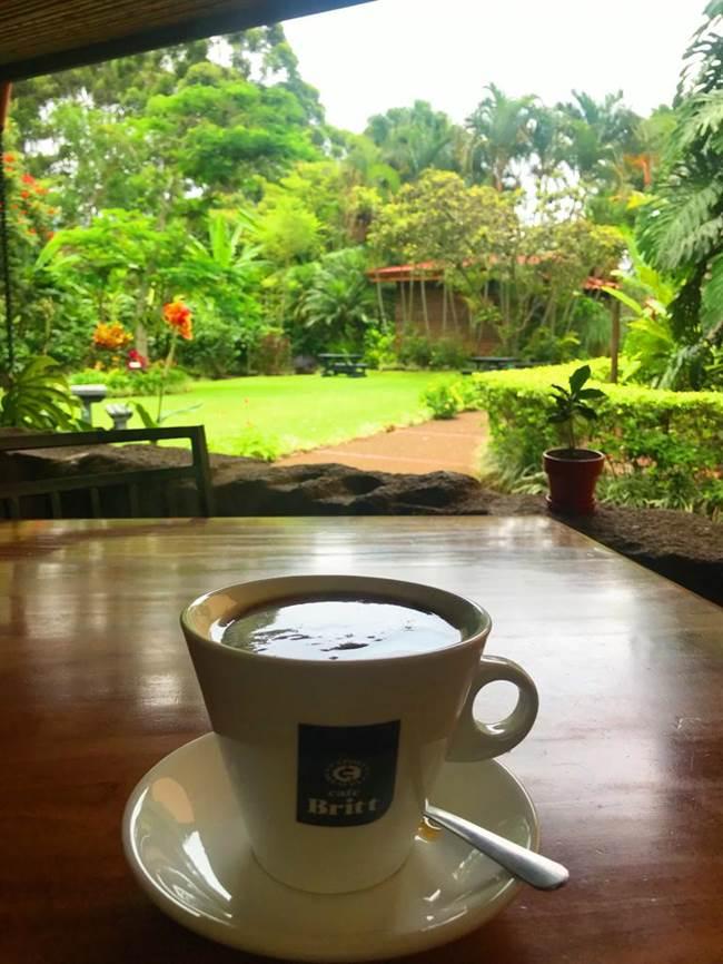 Enjoying a fresh cup at the Britt Coffee Plantation, San Jose.